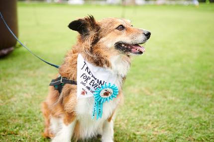 Muddy Dog Trek - Cotswolds 2020 - Muddy Dog Trek - Cotswolds 2020 - Adult and dog - 20K